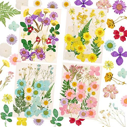 Flores prensadas secas naturales mezcladas...