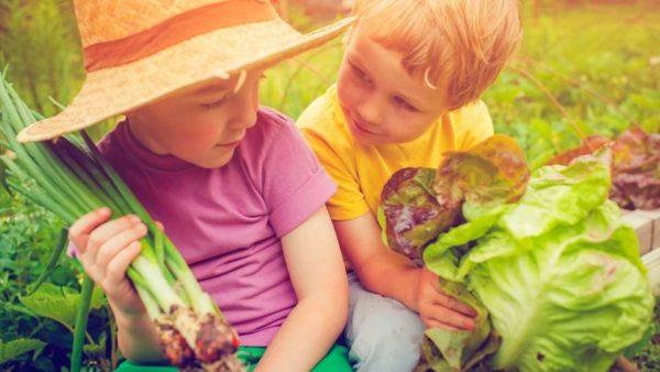 Niños realizando actividades educativas en un huerto