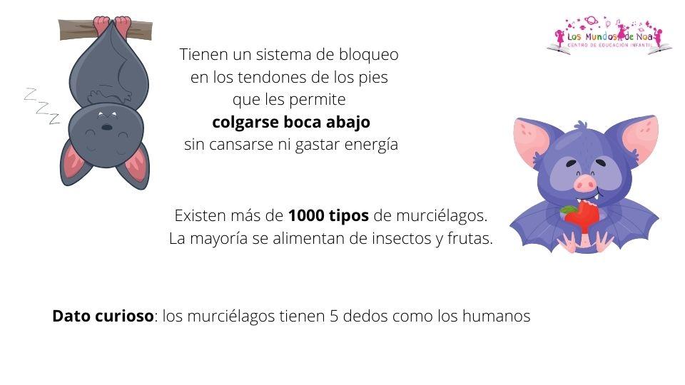 datos curiosos del murciélago