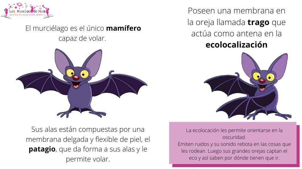 dibujo de murciélago