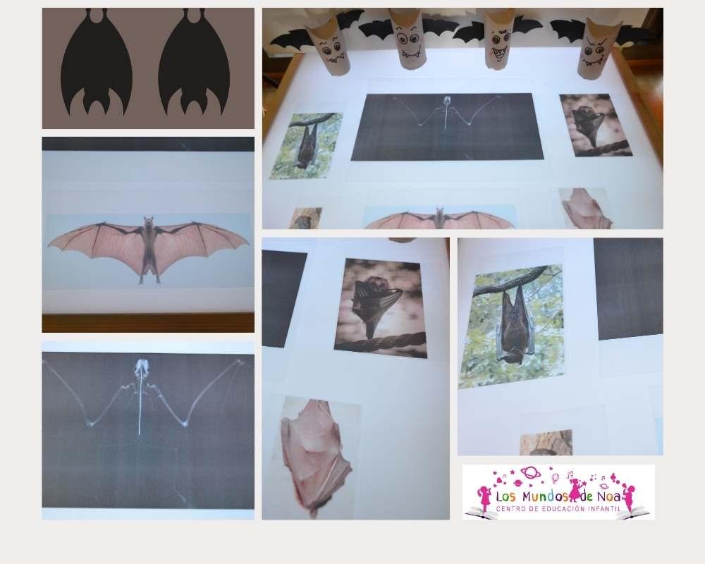 radiografías de murciélagos