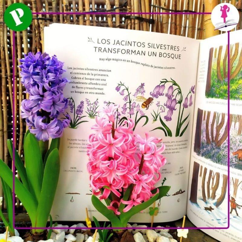flores jacintos con información